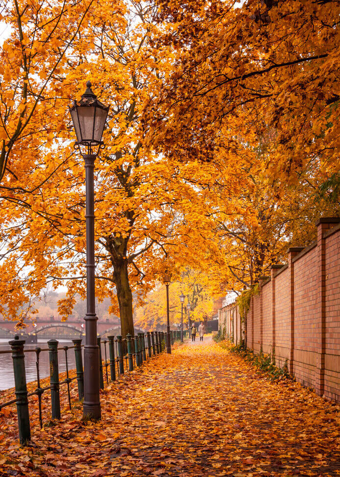 colorful autumn fall walk fine art photographs by yaopey