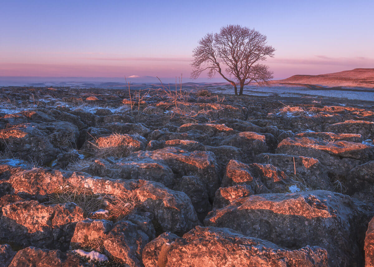 malham lone tree prelude fine art photography yaopey